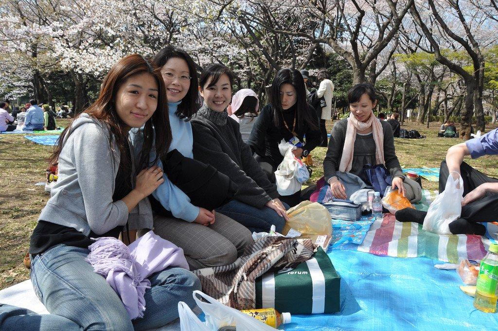 yoyogi_park_hanami