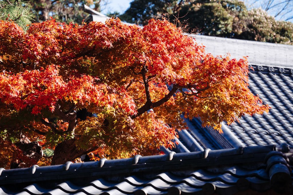 fall_color_engakuji_temple