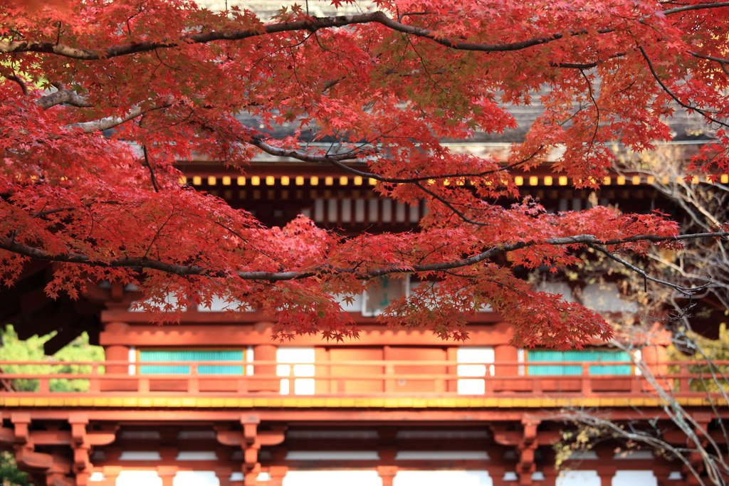 Autumn Leaves in Nara   Travel Guide 2020